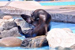 Aquaventuras Sea Lions Interaction (min age 8)