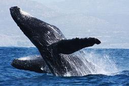 Whale Concert (min age 5)