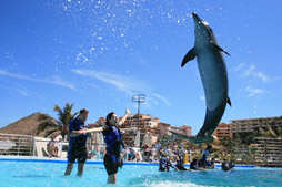 Dolphin Swim (min. age 4)