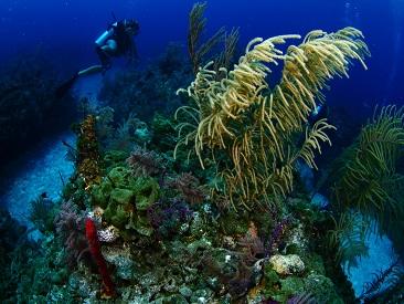 Learn to Dive - PADI Scuba Diver Course (min age 10) - Viva Wyndham Dominicus Beach
