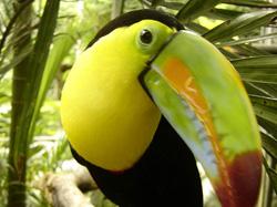 Bird Watching - Tucan