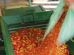 Coffee Plantation Tours