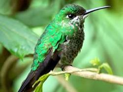 Hummingbird Garden at La Paz