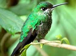 Bird Watching - Hummingbirds