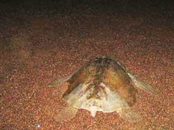 Sea Turtle Encounters