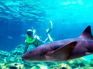 Combo Royal Dolphin Swim & Sea Lion or Shark Encounter at Ocean World Adventure Park (min. age 6)
