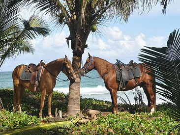 Horses 2 Hours in Bayahibe