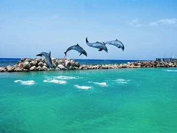 Dolphin Swim (Negril Location) from Montego Bay Hotels (min age 7 to participate)