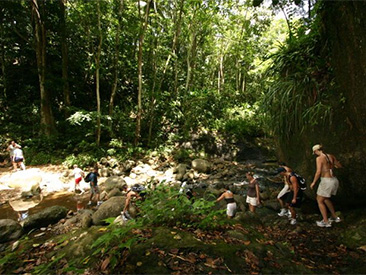 Rainforest Hike Adventure (min age 8) (not available from Coconut Bay Beach Resort)