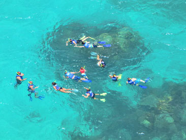 Paradise Snorkel (min age 4)