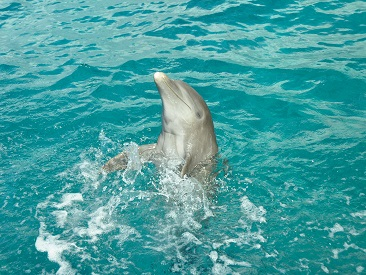 TOP 10 - Dolphinclusive Ride Xel-Ha (min height requirement, min age 5)