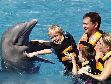 Aquaventuras Dolphin Royal Swim (min age 8)