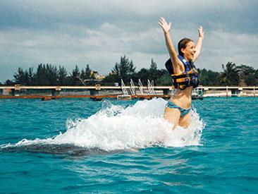 Dolphin Royal Swim Plus