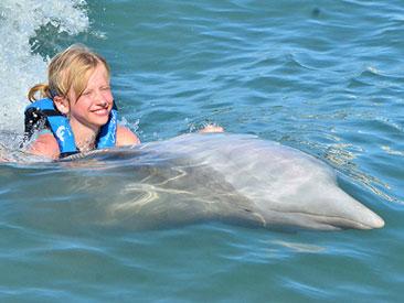 Dolphin Swim & Ride Los Cabos (min age 6)