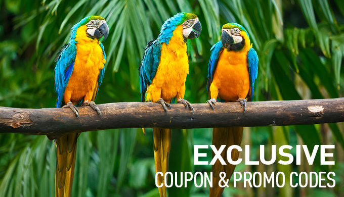 Coupon and Promo Codes on All-Inclusive Packages from